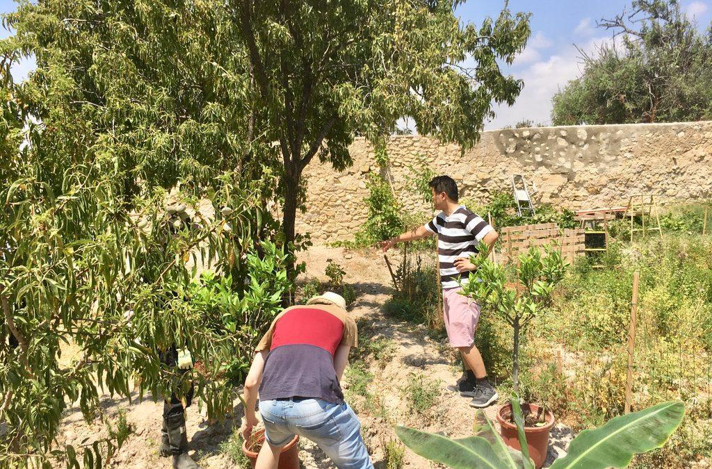 Cookpad y Sony Computer Science impulsan en Torre Juana un proyecto pionero para la recuperación del suelo desértico
